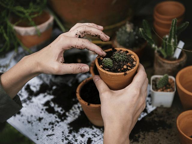 ルイボスティーの出がらしで堆肥を作る