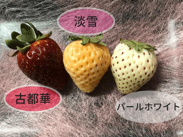 奈良県産いちご食べ比べ3種/古都華・淡雪・パールホワイト